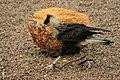 Oiseau4.jpg
