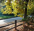 On the Sunny Side of the Street 12-21-14 (15451356424).jpg