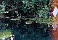 Onesnazenje reke Lahinje 2007.JPG