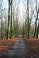 Op de Ossenberg (31389638515).jpg
