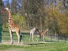 opel-zoo – wikipedia