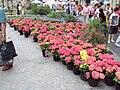 Outdoor flower stall, Sheffield - DSC07455.JPG