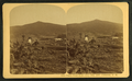 Owl's Head Slide, July 10th, 1885, Jefferson, N.H, from Robert N. Dennis collection of stereoscopic views 3.png