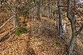 Pörtschach Winklern Waldweg Kalkseilbahn Rampe 20012020 8087.jpg