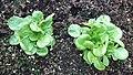 P1000942 Salat.jpg