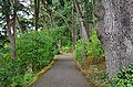 PLU - footpath southeast of Mary Baker Russell Music Center 01.jpg
