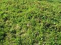 Paintbrush habitat - Spray Park (2788862392).jpg