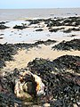 Paramoudra surrounded by seaweed - geograph.org.uk - 793054.jpg