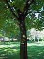 Parc La Fontaine 18.jpg