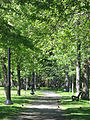 Parc Lafontaine Allee.JPG