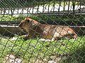 Parque Zoologico de Caricuao 2000 021.JPG