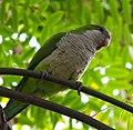 Parrot 1 (5827974565).jpg
