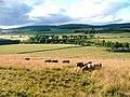 Pasture at Whitehill - geograph.org.uk - 37275.jpg