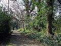 Path, Barnett Demesne - geograph.org.uk - 1211988.jpg