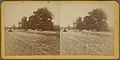 Paving of Lenox Ave. north of Central Park, from Robert N. Dennis collection of stereoscopic views.jpg