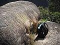 Pedra do Queijo^^^^ - PARNASO - panoramio.jpg