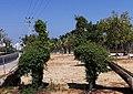PikiWiki Israel 71782 square in rishon lezion.jpg