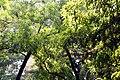 Plants at DC Hill, Chittagong (1).jpg