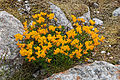 Plants from the Krimml Falls 34.jpg