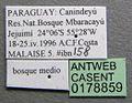 Platythyrea exigua casent0178859 label 1.jpg
