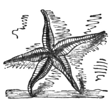 Poems of the Sea, 1850 - Hope in God