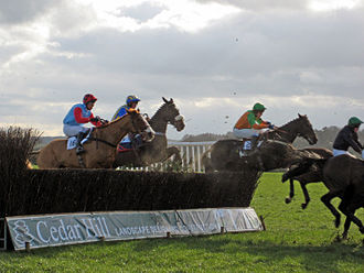 Point-to-point (steeplechase) - Horses jumping a point to point fence