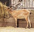 Prague Zoo 17.jpg