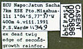 Pseudomyrmex faber casent0005836 label 1.jpg