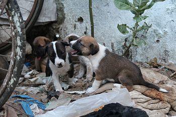 Puppy home.jpg
