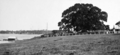 Queensland State Archives 273 Tewantin and the Noosa River c 1931.png