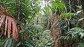 Rainforestation, Kuranda - panoramio (6).jpg