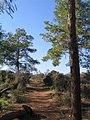 Ramat-ha-Nadiv-manor-trail-759.jpg