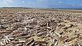 Razor Clam Shells. - panoramio.jpg