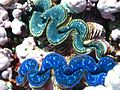 Reef2304 - Flickr - NOAA Photo Library.jpg
