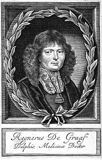 Regnier de Graaf Dutch physician (1641-1673)