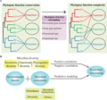 Relationships among microbial phylogeny, diversity and ecosystem functioning.webp