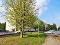 Remscheider Straße Pirna (42731133260).jpg
