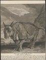 Rhinoceros unicornis - 1700-1880 - Print - Iconographia Zoologica - Special Collections University of Amsterdam - UBA01 IZ22000233.tif