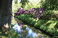 Rhododendronpark Bremen 20090513 017.JPG