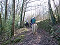 Riding in the woods - geograph.org.uk - 694311.jpg