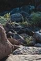 Rio seco no Lajedo da Saca de Lã.jpg