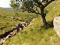 River Falloch - geograph.org.uk - 219333.jpg