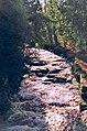 River Greta, Rokeby - geograph.org.uk - 121870.jpg