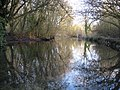 River Lambourn at Elton Farm - geograph.org.uk - 1660768.jpg