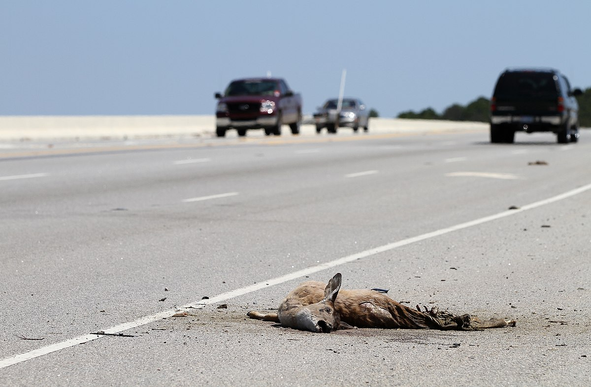 roadkill wikipedia