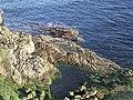 Rockpool near Wilkhaven - geograph.org.uk - 591437.jpg