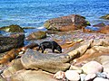 Rocks on Seana Chamas Beach - geograph.org.uk - 63382.jpg