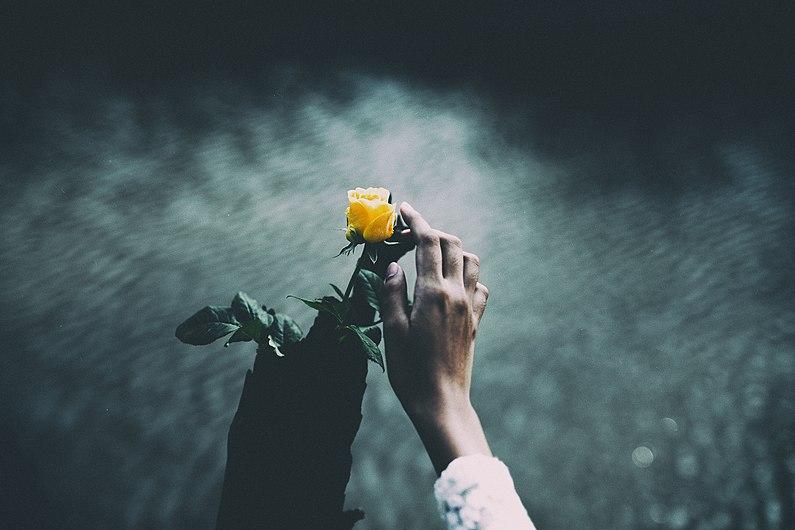 Rose touch (Unsplash).jpg