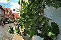 Rothenburg ob der Tauber, Mittelalterliches Kleinod an der Romantischen Straße 01.jpg