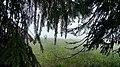 Rumanian Forest, Carpatos Mountains 35.jpg